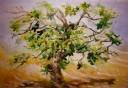 'Fig Tree', watercolour on board, 30 x 60 cm